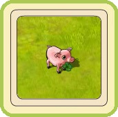 Name:  Lucky pig.jpg