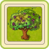 Name:  Magnificent plum tree.jpg