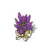 Click image for larger version.  Name:lilac 4.png Views:69 Size:9.8 KB ID:6864