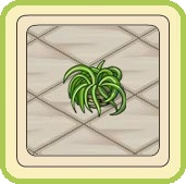 Name:  Green lily.jpg