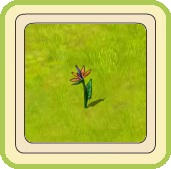 Name:  Strelitzia.jpg