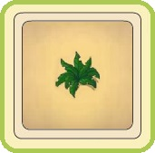 Name:  Forgotten fern.jpg