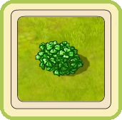Name:  Enormous clover bush.jpg