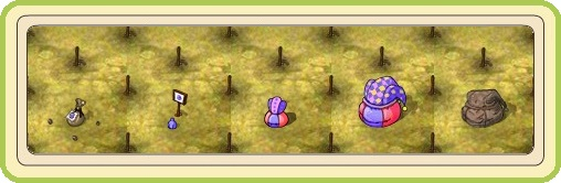 Name:  Carnival Dance, Silly shrub (Premium), stages of growth.jpg Views: 24 Size:  37.8 KB