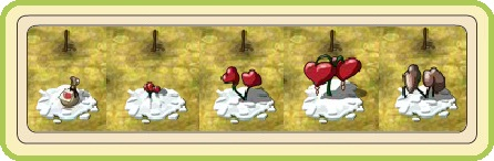 Name:  Festival of Hearts, Heartsfern (Premium), stages of growth.jpg Views: 10 Size:  31.9 KB